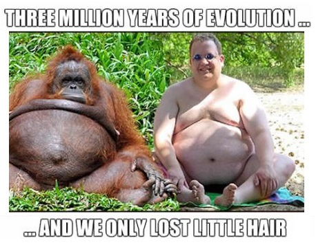 evolution-human-monkey