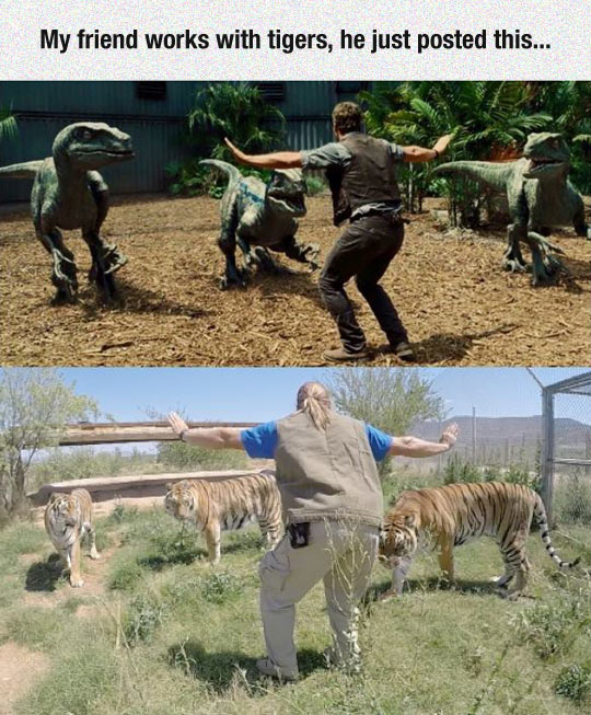 funny-Jurassic-World-raptors-tigers-trining