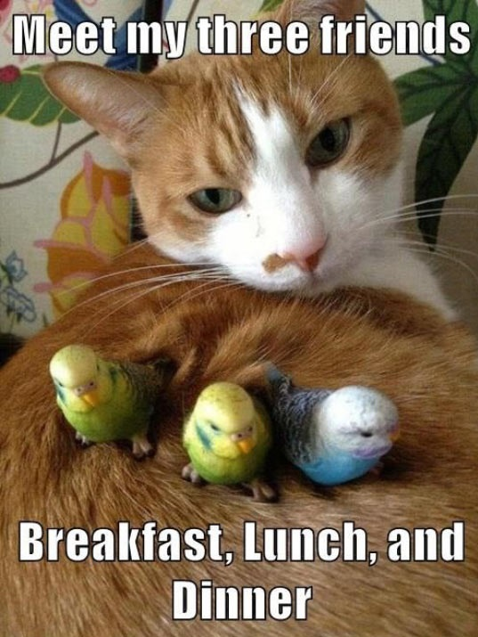 funny-cat-birds-friends-food