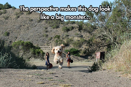 funny-dog-giant-perspective-running