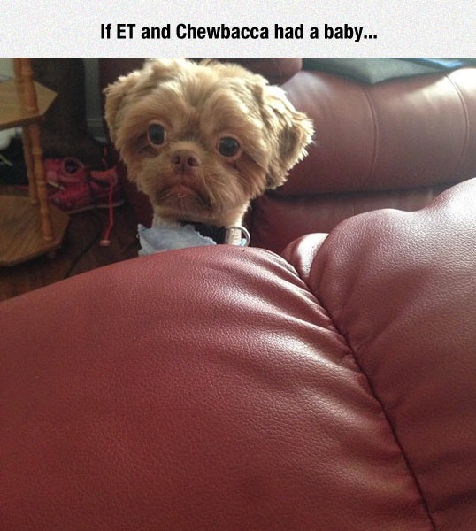 funny-dog-long-neck-couch