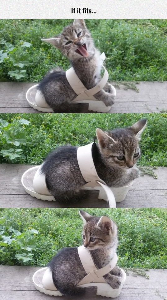 funny-kitty-shoe-lady-fit