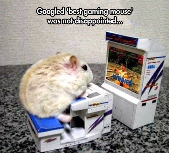 funny-mouse-playing-video-game
