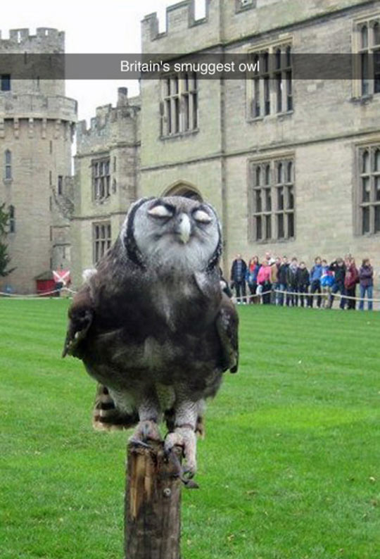 funny-owl-Britain-smuggest-castle