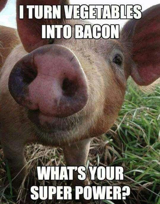 funny-pig-bacon-make-super-power