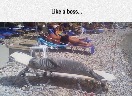 funny-seal-lying-beach-bed