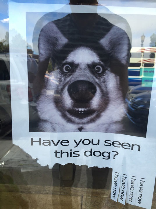 funny-sign-dog-face