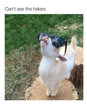 goat-haters-sunglasses
