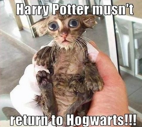 harry-potter-dobby-cat