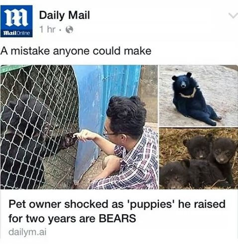 pet-owner-bears-news