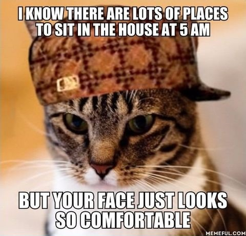 scumbag-cat-face-sit