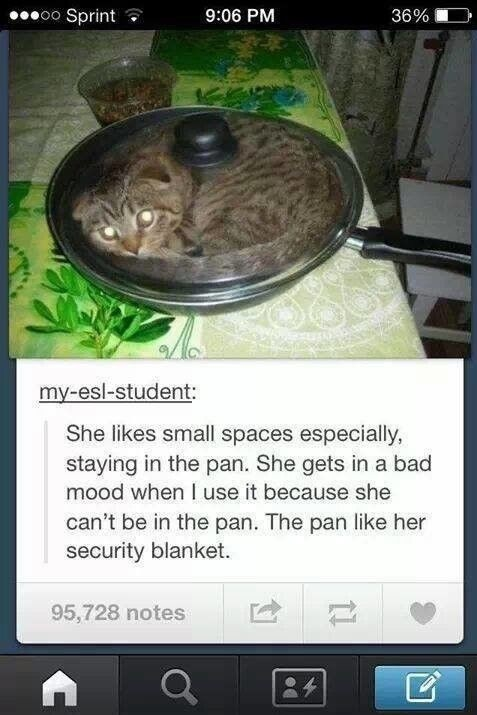 security-blanket-kitty-pan