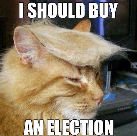 cat-donald-trump-election