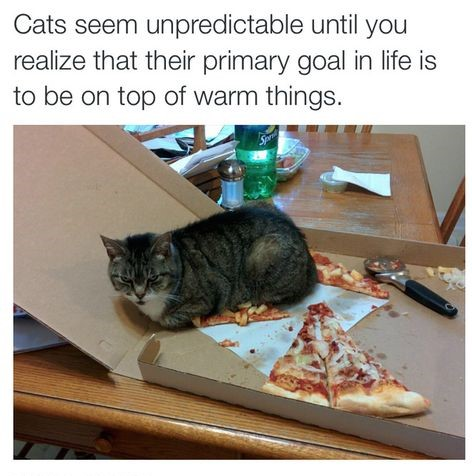 cat-pizza-warm-things