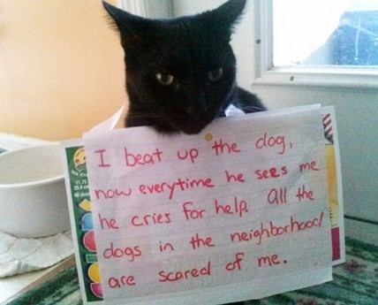 cat-shaming-note-dog