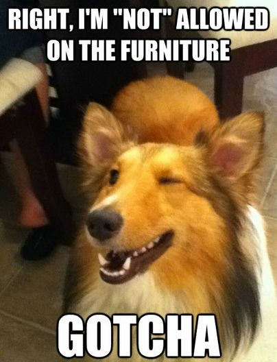 dog-furniture-wink-cute