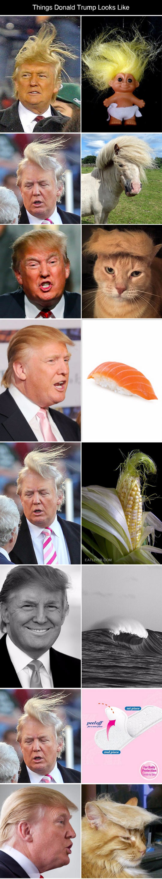 funny-Donald-Trump-hair-looking-like-things