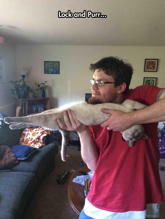 funny-cat-weapon-charge-guy-holding