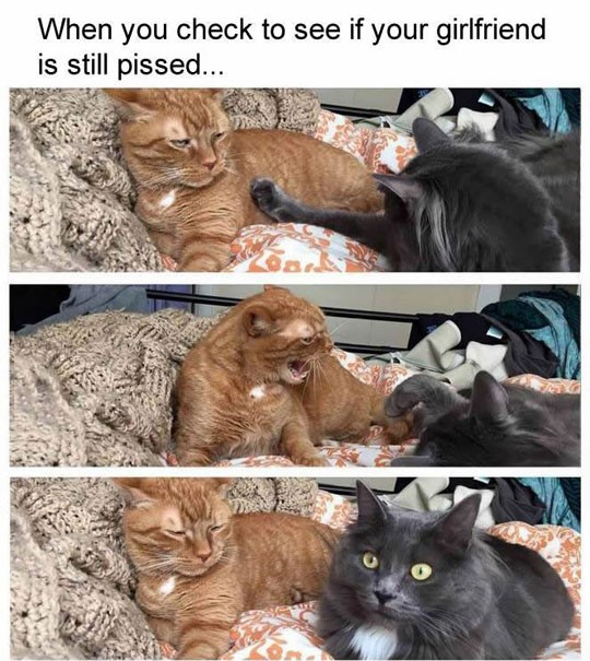 funny-cats-fight-angry-girlfriend-mad
