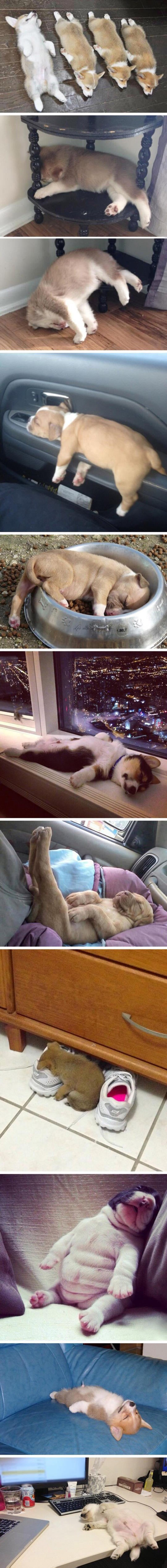 funny-dogs-sleeping-cute-puppies
