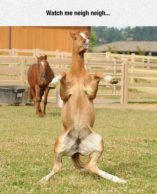 funny-horse-dancing-watch-me-neigh