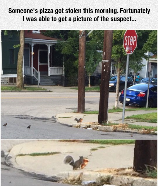 funny-squirrel-stealing-pizza-road