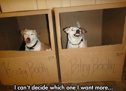 kissing-biting-dogs-boxes