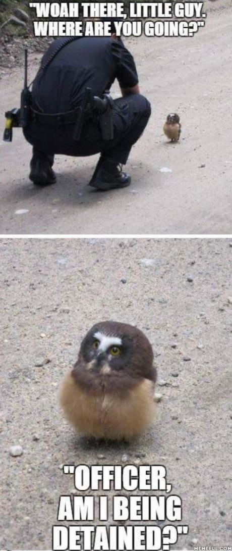 owl-policeman-detained-cute