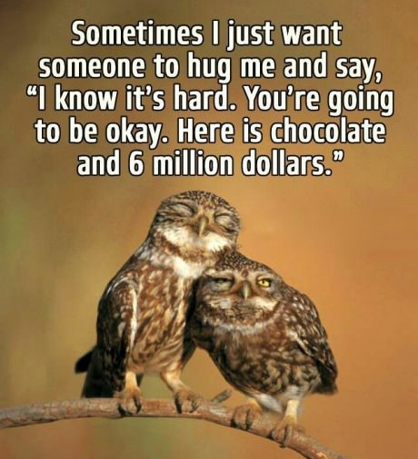 owls-hug-hard-chocolate