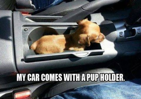 pup-holder-dog-car