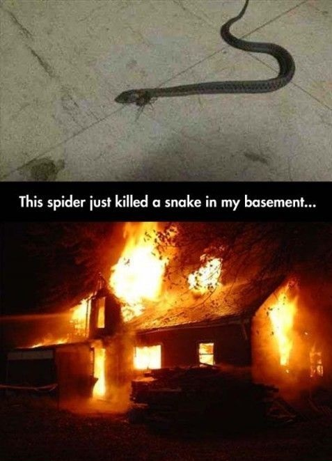 Kill It With Fire Meme Spider