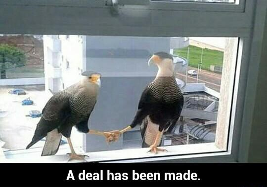 birds-making-a-deal