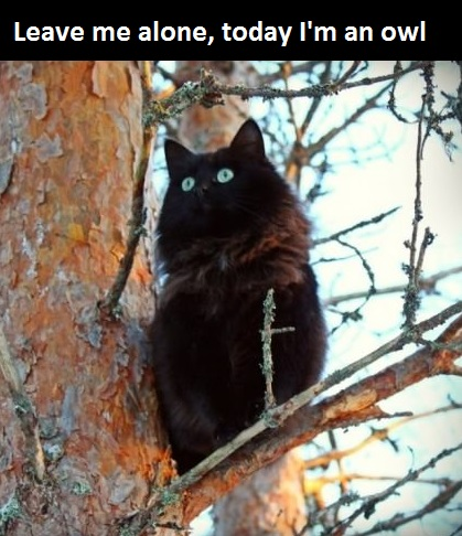 black-cat-owl-tree
