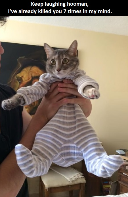 cat-baby-clothes-angry