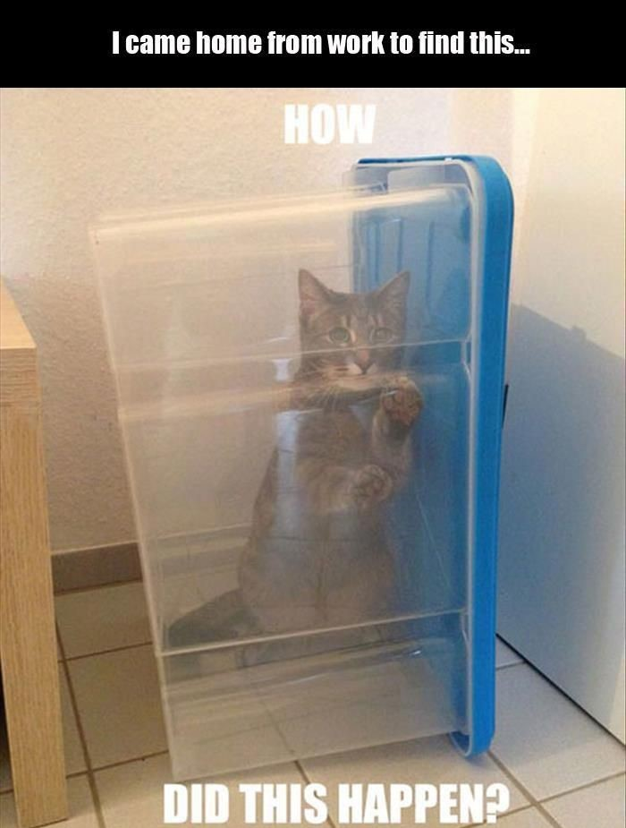 cat-box-trapped-help