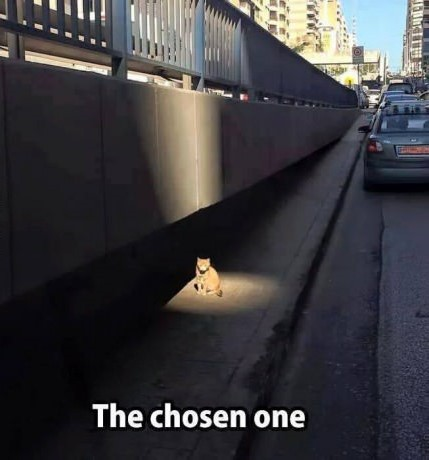 cat-chosen-one-light
