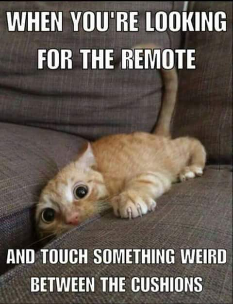 cat-remote-cushions-weird