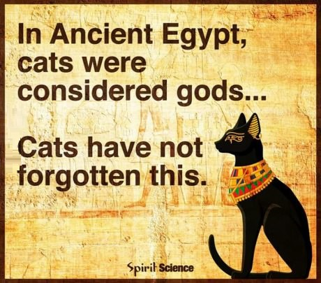 cats-dogs=ancient-egypt