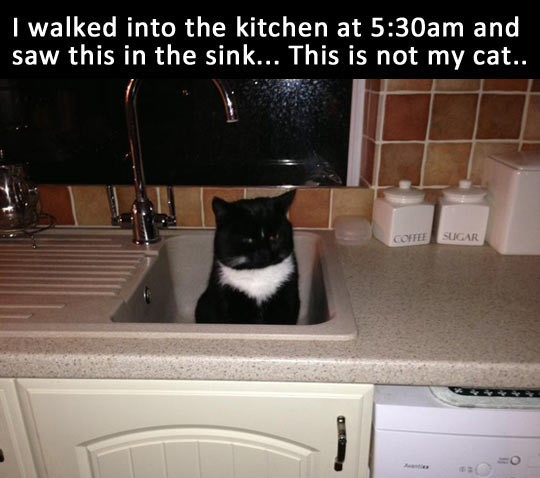 cool-cat-sink-kitchen
