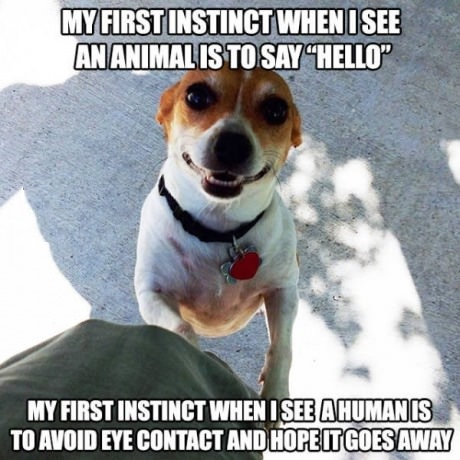 dog-human-hello-avoid