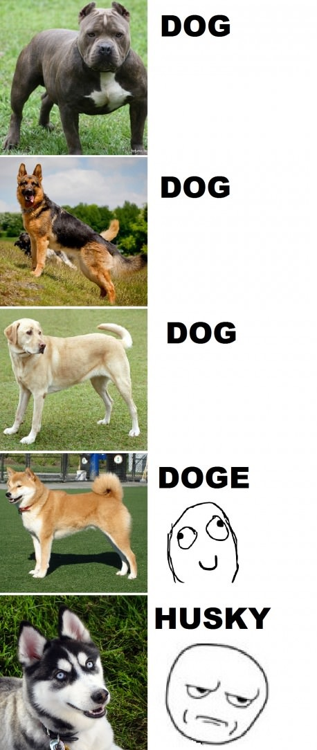 Dogs according to the internet