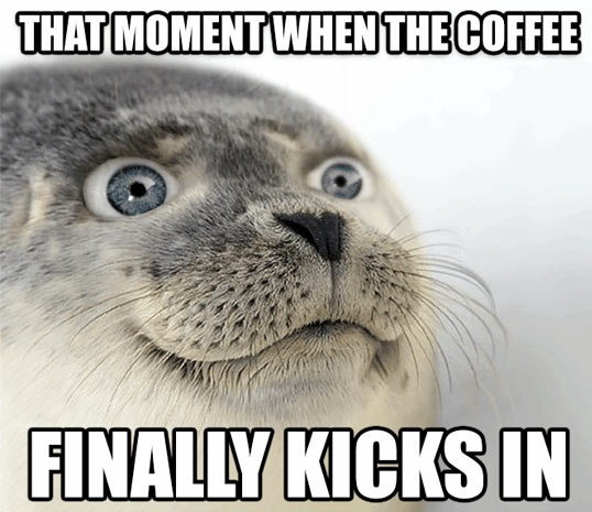funny-awkward-seal-eyes-open-meme