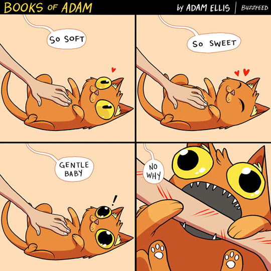 funny-cat-belly-pet-angry