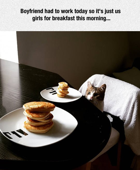 funny-cat-eating-pancakes