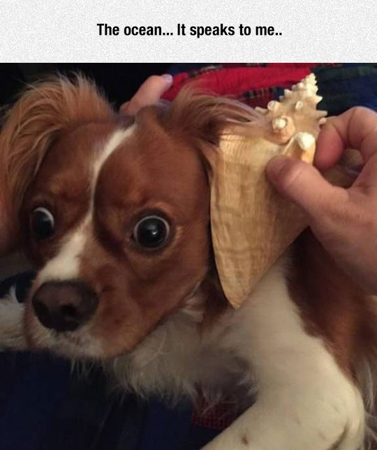funny-dog-surprised-ocean-shell