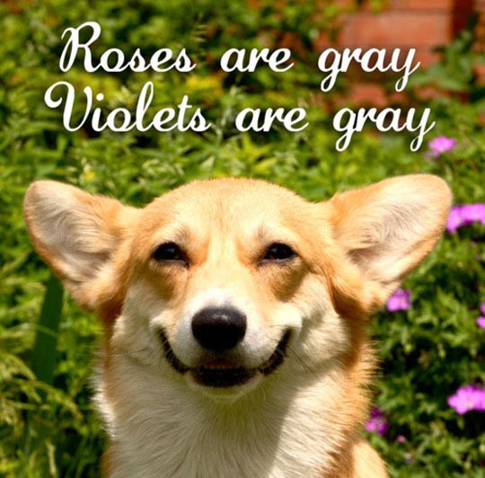 funny-roses-violets-poem-quote-dog-gray