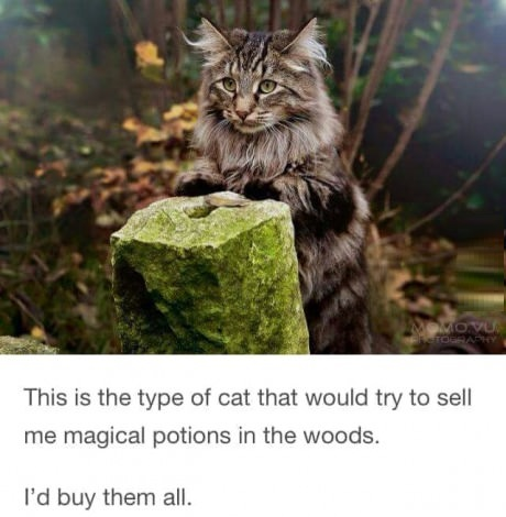 magical-cat-woods-potions