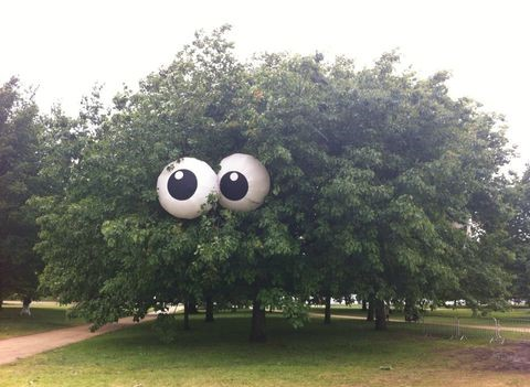 tree-eyes-trolling-nature
