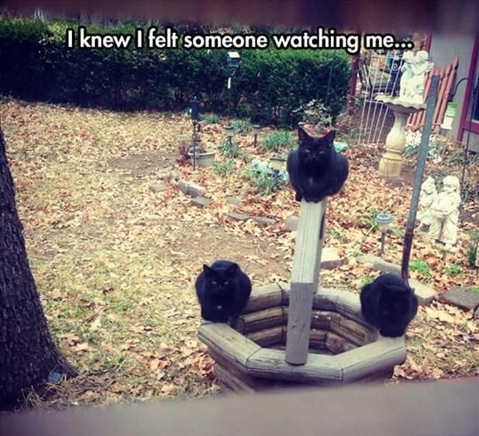 black-cats-watching-creepy
