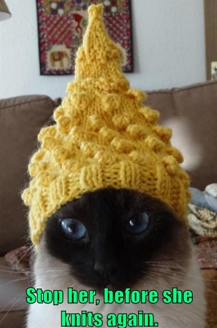 cat-knited-hat